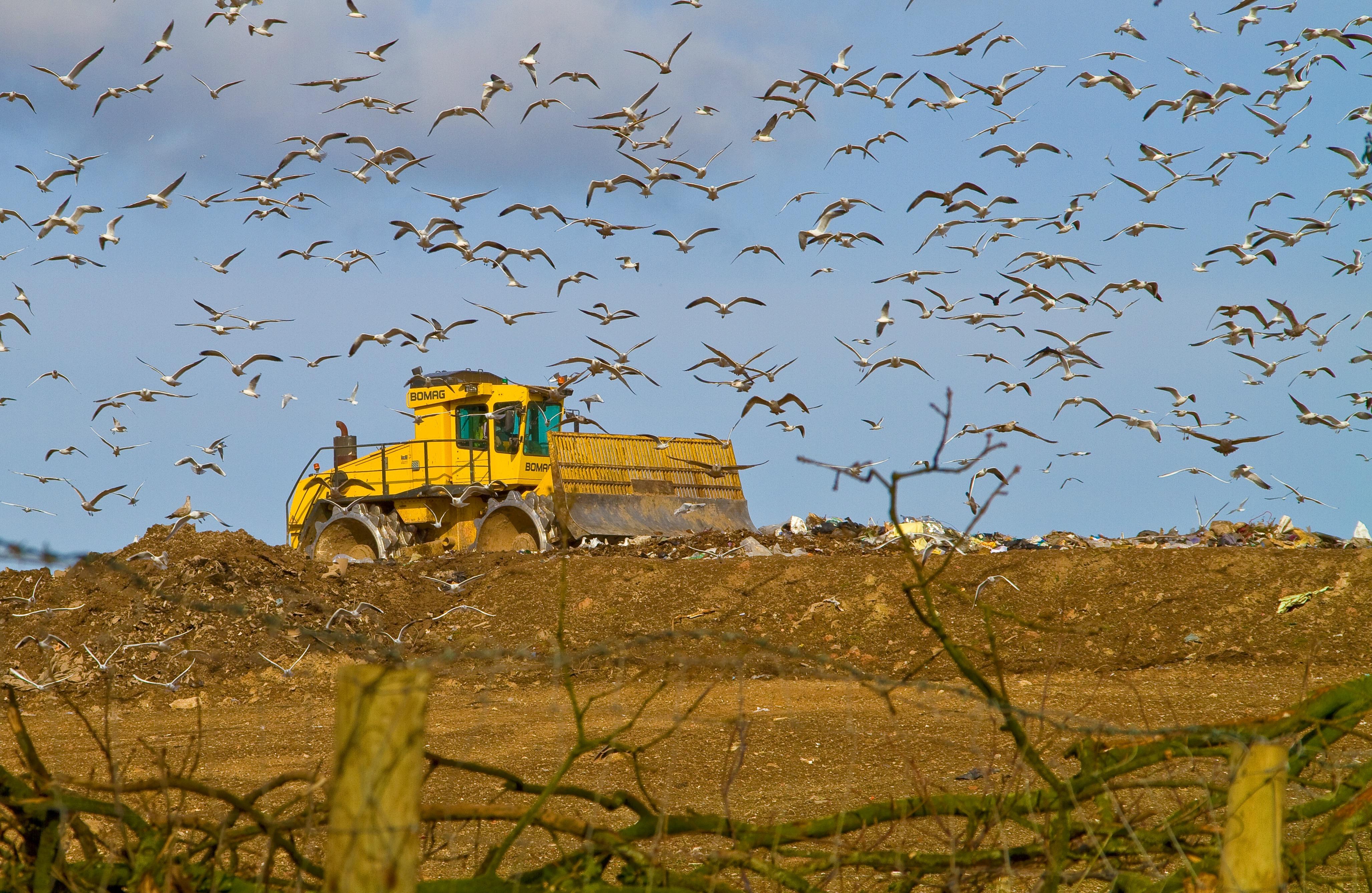 Müll Recycling Lebensmittelverschwendung Abfall Kreislaufwirtschaft