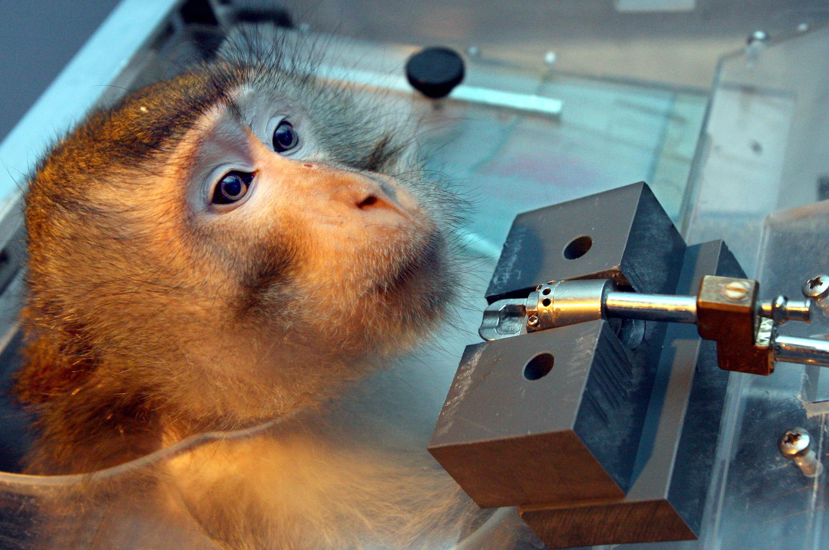 Das europäische Forschungsprojekt EU-ToxRisk soll den Verzicht auf Tierversuche in der Chemikalienbewertung erarbeiten.